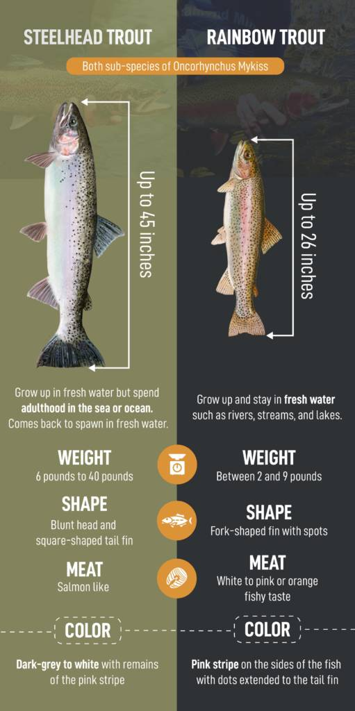 comparison between rainbow and steelhead trout